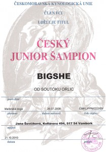 cesky-junior-sampion-bigshe.jpg